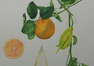 Oranger et main de Boudha