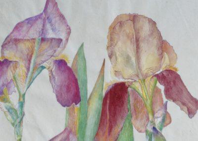 Trois iris sur papier chinois