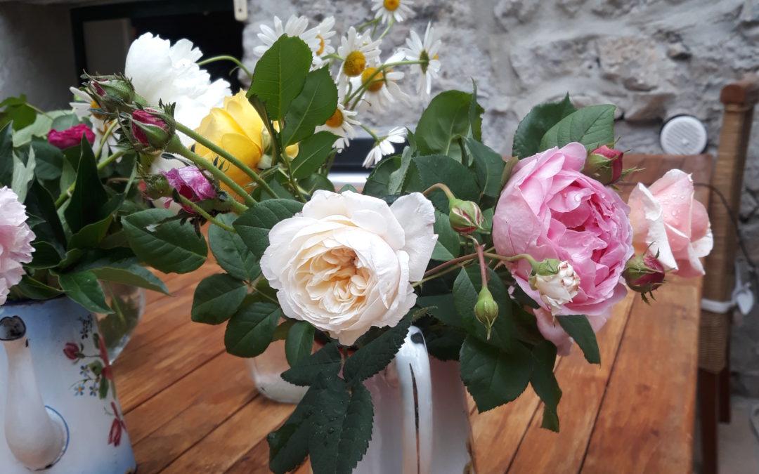Cours sur les roses du jardin