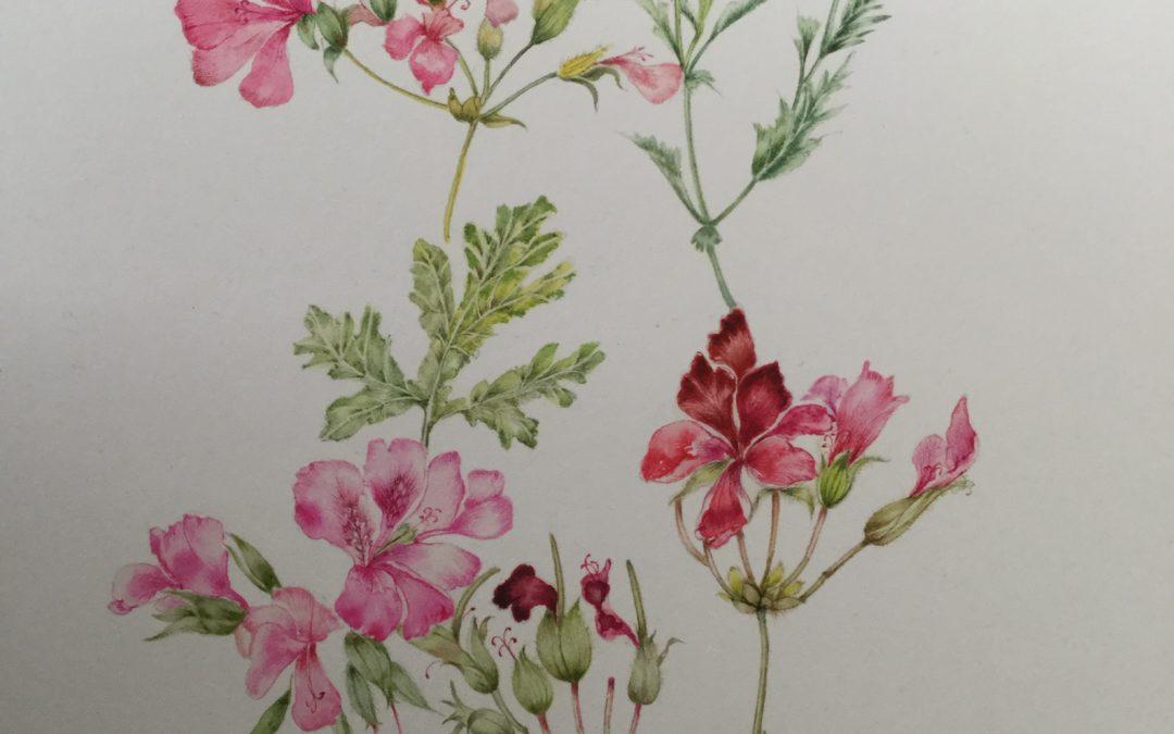 Stage d'aquarelle botanique «à la manière asiatique»