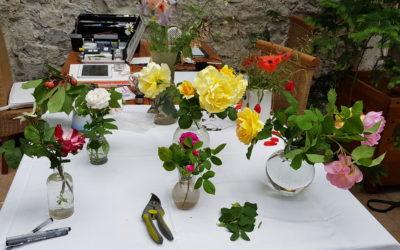 Le déconfinement  à l'atelier de dessin botanique