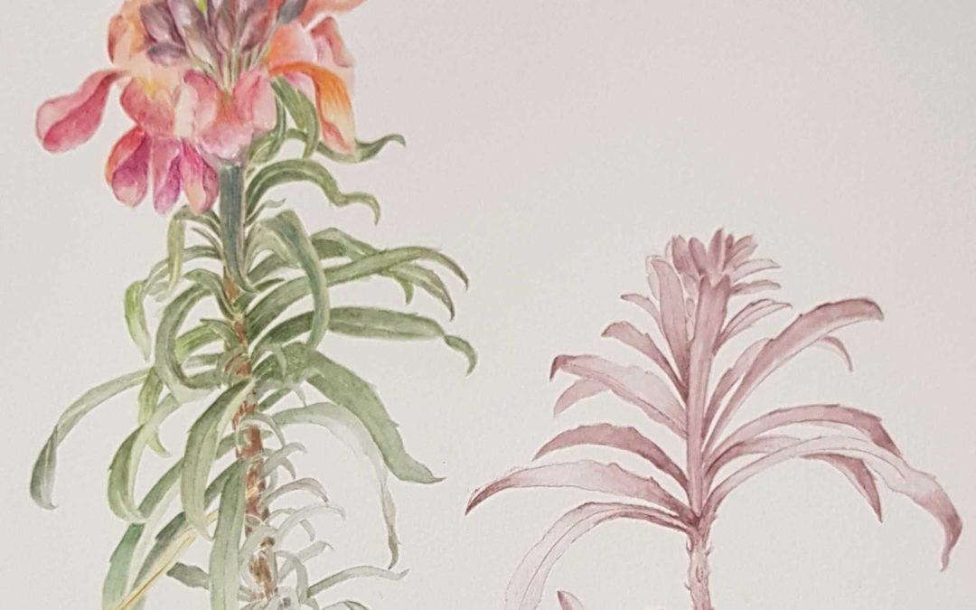 Les fleurs de Proust